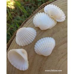 1 τεμ, 30 χλστ, Κοχύλι με Φυσικές Πέρλες και Μεταλλικά Στοιχεια, Κρεμαστό, Λευκό